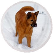 Dog Days Of Winter Round Beach Towel