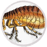 Dog Flea, Illustration Round Beach Towel