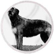 Dog: Irish Wolfhound Round Beach Towel