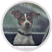 Dog Looking Out Car Window Round Beach Towel