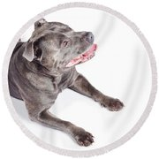 Dog Looking Up To Pet Copyspace Round Beach Towel
