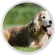Dog Lying Down On The Green Grass Round Beach Towel