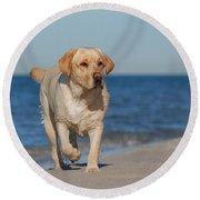 Dog On The Beach Round Beach Towel