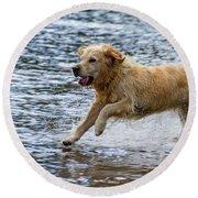 Dog Running On Shallow Lake Shore Round Beach Towel