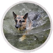 Dog Swimming In Cold Water Round Beach Towel