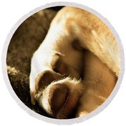 Dogs Paws Round Beach Towel