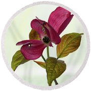 Dogwood Ballet 1 Round Beach Towel