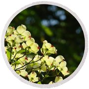 Dogwood Flowers White Dogwood Tree Flowers Art Prints Cards Baslee Troutman Round Beach Towel