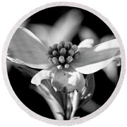 Dogwood In Black And White Round Beach Towel