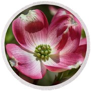 Dogwood Spring Round Beach Towel