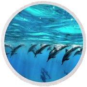Dolphin Dive Round Beach Towel by Sean Davey