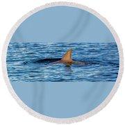 Dolphin Sighting Round Beach Towel