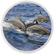 Dolphins Leaping Round Beach Towel