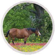 Domestic Horse In Field Of Wildflowers Round Beach Towel