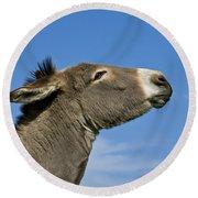 Donkey Demanding A Treat Round Beach Towel