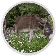Donkey Grazing In Greece Round Beach Towel