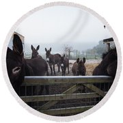 Donkeys Round Beach Towel