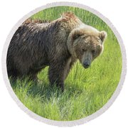 Don't Mess With Mama Bear Round Beach Towel by Belinda Greb