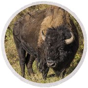 Don't Mess With This Bison Round Beach Towel