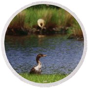 Double-crested Cormorant 2q Round Beach Towel