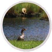 Double-crested Cormorant 3 Round Beach Towel
