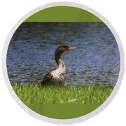 Double-crested Cormorant 4 Round Beach Towel