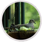 Dove Nesting, Balcony Garden, Hunter Hill, Hagerstown, Maryland, Round Beach Towel