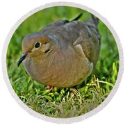 Dove With Hdr Round Beach Towel