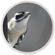 Downy Woodpecker Round Beach Towel