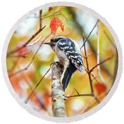 Downy Woodpecker In Autumn Forest Round Beach Towel