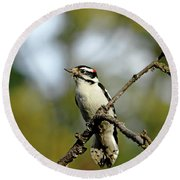 Downy Woodpecker In Fall Round Beach Towel