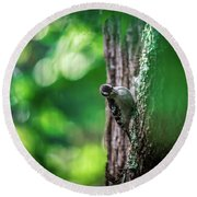 Downy Woodpecker In The Wild Round Beach Towel