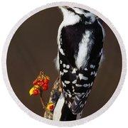 Downy Woodpecker On Tree Branch Round Beach Towel