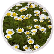 Dozens Of Daisies Round Beach Towel