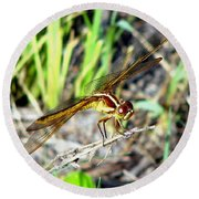 Dragonfly 1 Round Beach Towel
