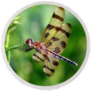 Dragonfly 10 Round Beach Towel
