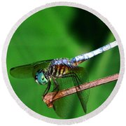 Dragonfly 11 Round Beach Towel