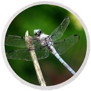 Dragonfly 12 Round Beach Towel