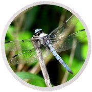 Dragonfly 13 Round Beach Towel
