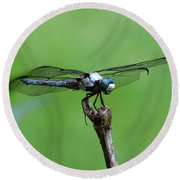 Dragonfly 14 Round Beach Towel
