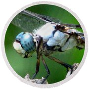 Dragonfly 16 Round Beach Towel