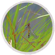 Dragonfly 4 Round Beach Towel