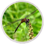 Dragonfly 7 Round Beach Towel