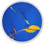 Dragonfly And Leaf Round Beach Towel