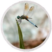 Dragonfly At Cypress Gardens Round Beach Towel