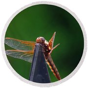 Dragonfly Cling Round Beach Towel