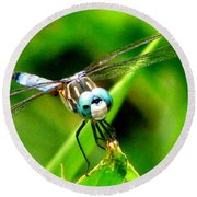 Dragonfly Close Up 2 Round Beach Towel