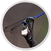 Dragonfly Color Round Beach Towel