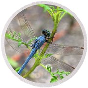 Dragonfly Delight Round Beach Towel