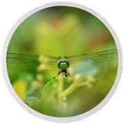 Dragonfly Dream In Green Round Beach Towel